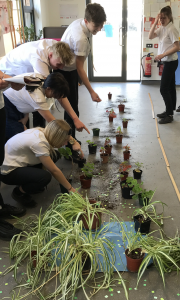 Science - plants practical